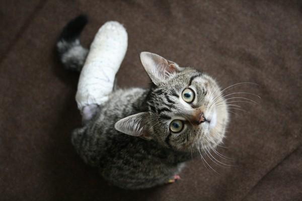 chat c Rosny-sous-Bois